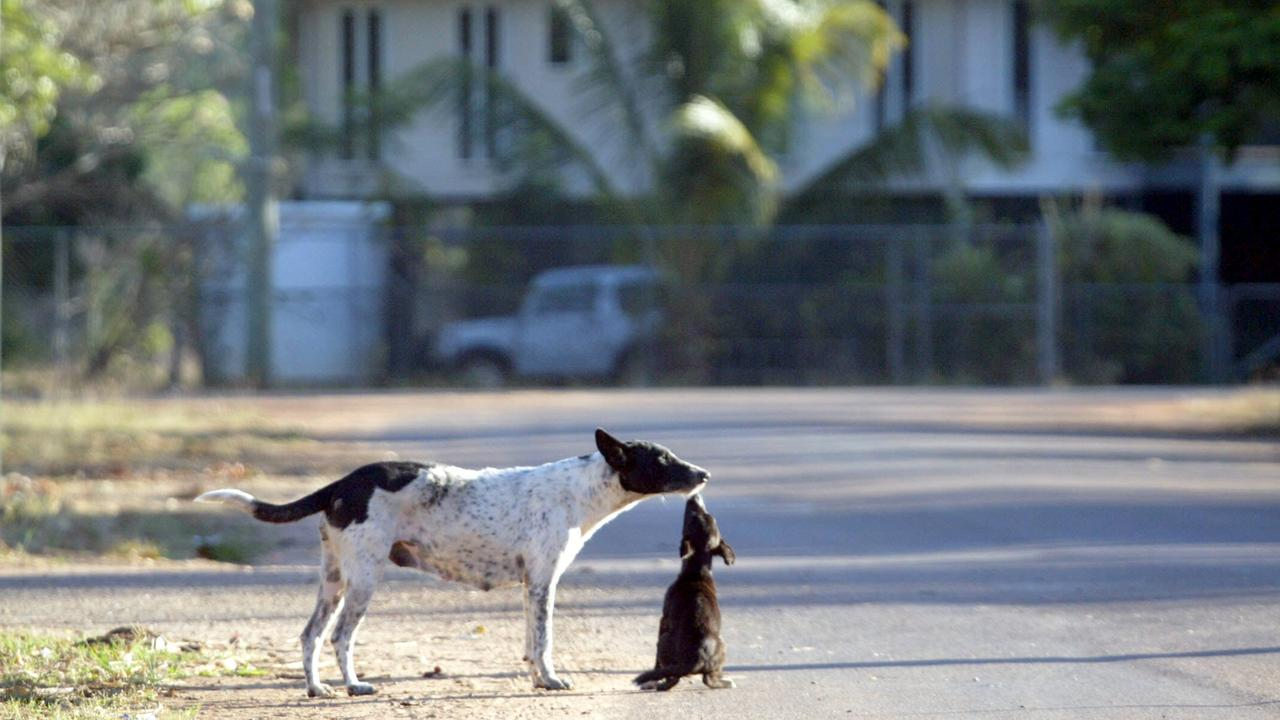 Stray dogs in Aurukun, 2003. Pic Bruce Long