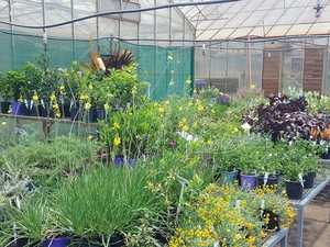 Grab a free snag and help others at big plant sale