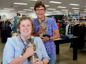 Toowoomba's RSPCA op shop celebrates first anniversary