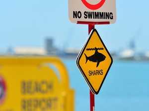 Shark sighting closes Sunshine Coast beach