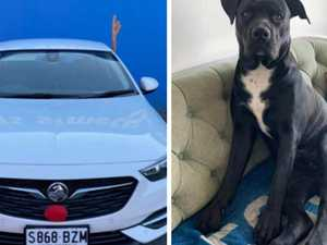 'Just let my dog go': Simba stolen by car thieves