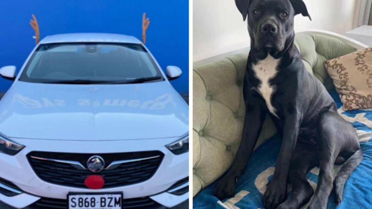 Jessica Sze t - the mum of stolen puppy Simba - begs for her dog's return after thieves made off with a car that the dog was in.