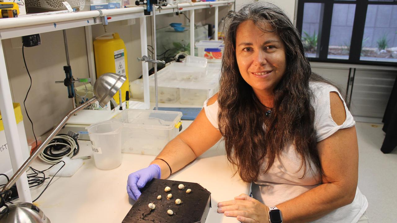 SNAIL TRAIL: USC's Kate Ballard is working on a PhD project to discover how snails communicate with each other