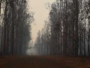 State Forests reopen after fires