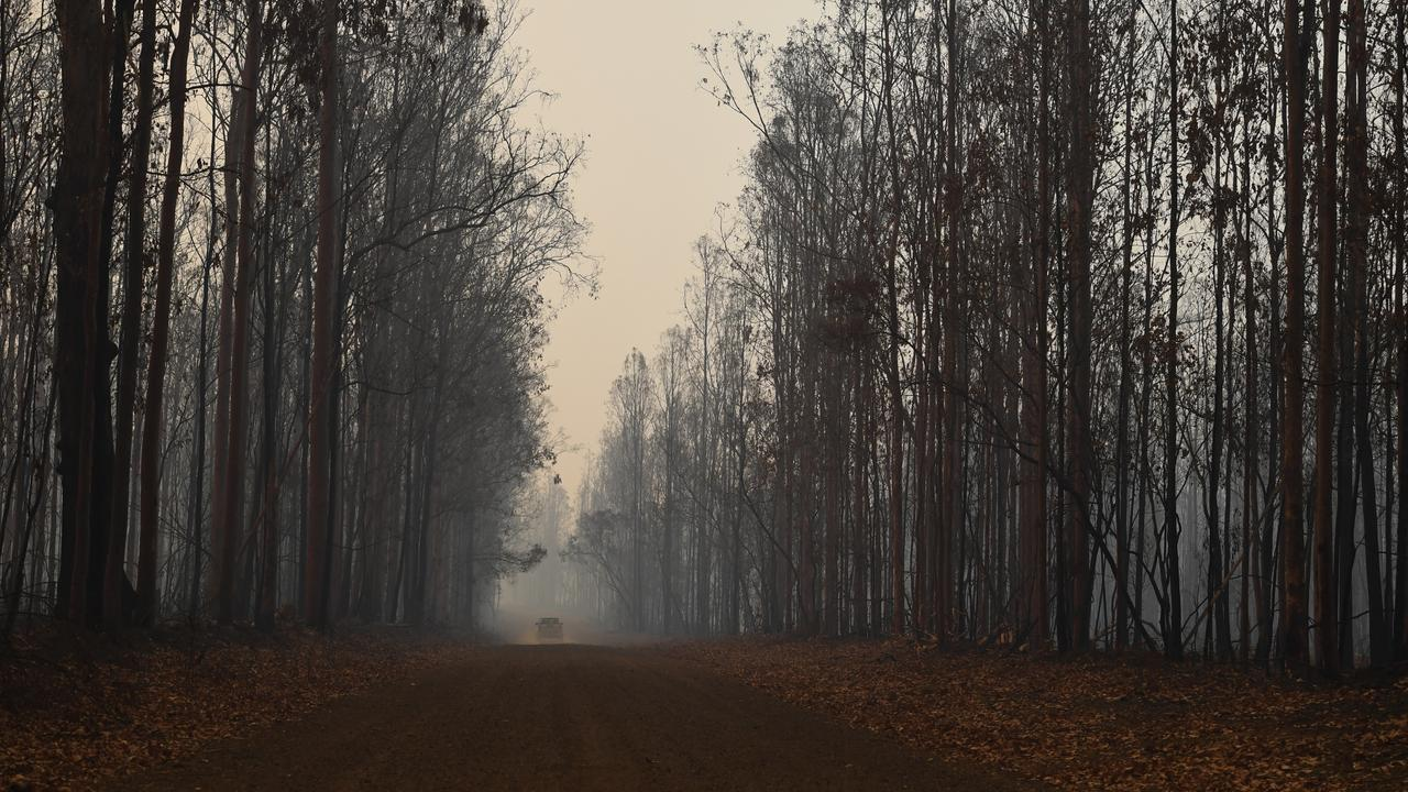 REOPENED: Many Northern Rivers State Forests have reopened today (January 22) after Forestry Corporation deemed them safe for public access following the recent bushfires. Photo: Marc Stapelberg