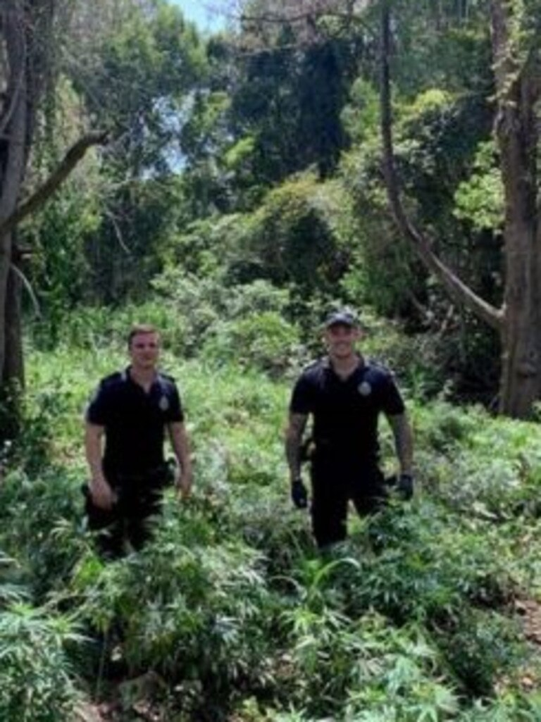 Police officers at the site of the crop. Picture: Queensland Police