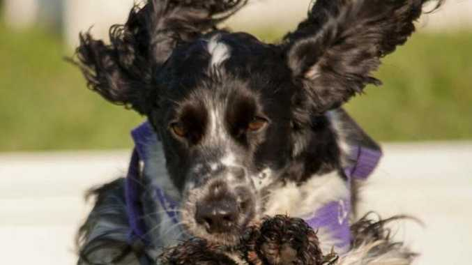 Man in court battle over 'loose' dogs