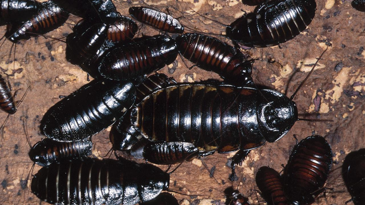 A magistrate has slammed the owner of a former well known bar and restaurant after live and dead cockroaches were found in its kitchen.