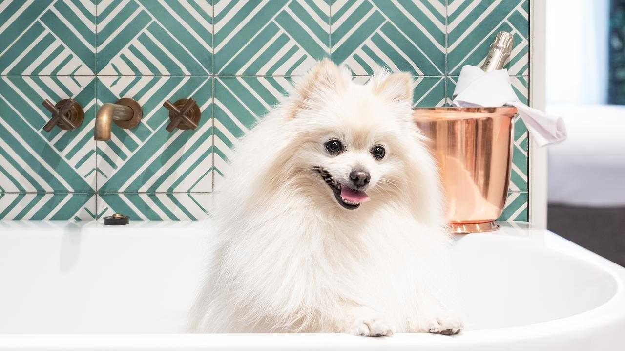 Luxury hotels are taking pet-friendly accommodation to the next level.