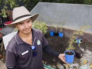 Aussie seedlings perfect for koalas