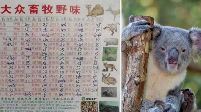 Koalas, bats, wolf pups sold at Chinese virus market