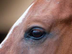 Woman's serious facial injuries after horse kick