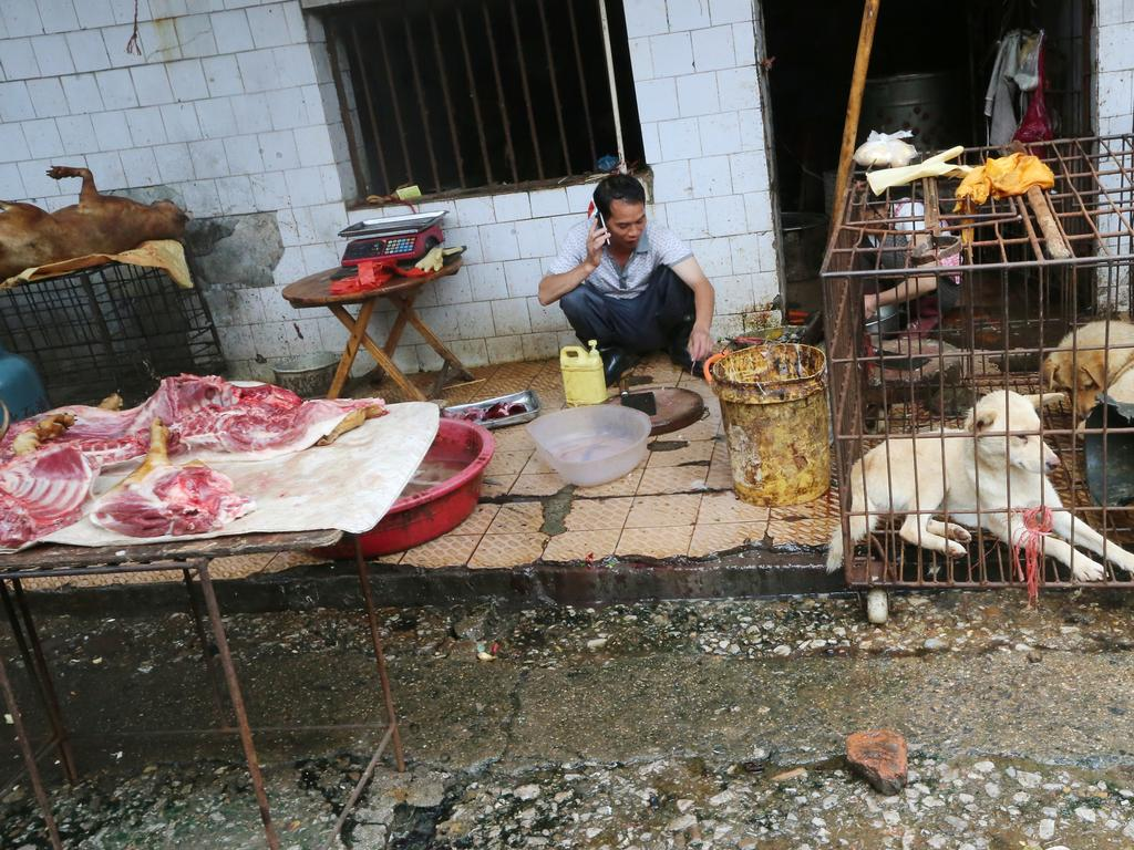 Wet markets like this one in Guilin, China, place live and dead animals in proximity with humans, making them a breeding ground for coronaviruses. Picture: David Wong via SCMP via Getty Images
