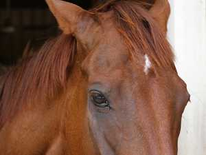 Horse club plays 'Russian roulette' with deadly virus