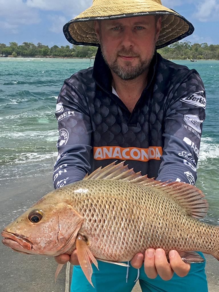 Gotcha - Greg Findlay won the $100 Davo's Tackle World/ChaseBaits Fish of the Week prize with the quality mangrove jack he caught and released in the lower Noosa estuary. Photo: www.fishingnoosa.com.au