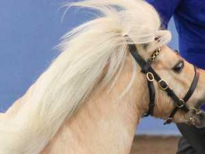 Woman in hospital after miniature horse attack