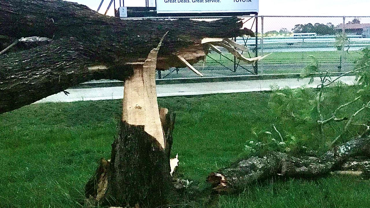 A tree snapped at the truck next to Grafton racecourse from damaging winds in a severe thunderstorm at Grafton on Thursday, 23rd January, 2020