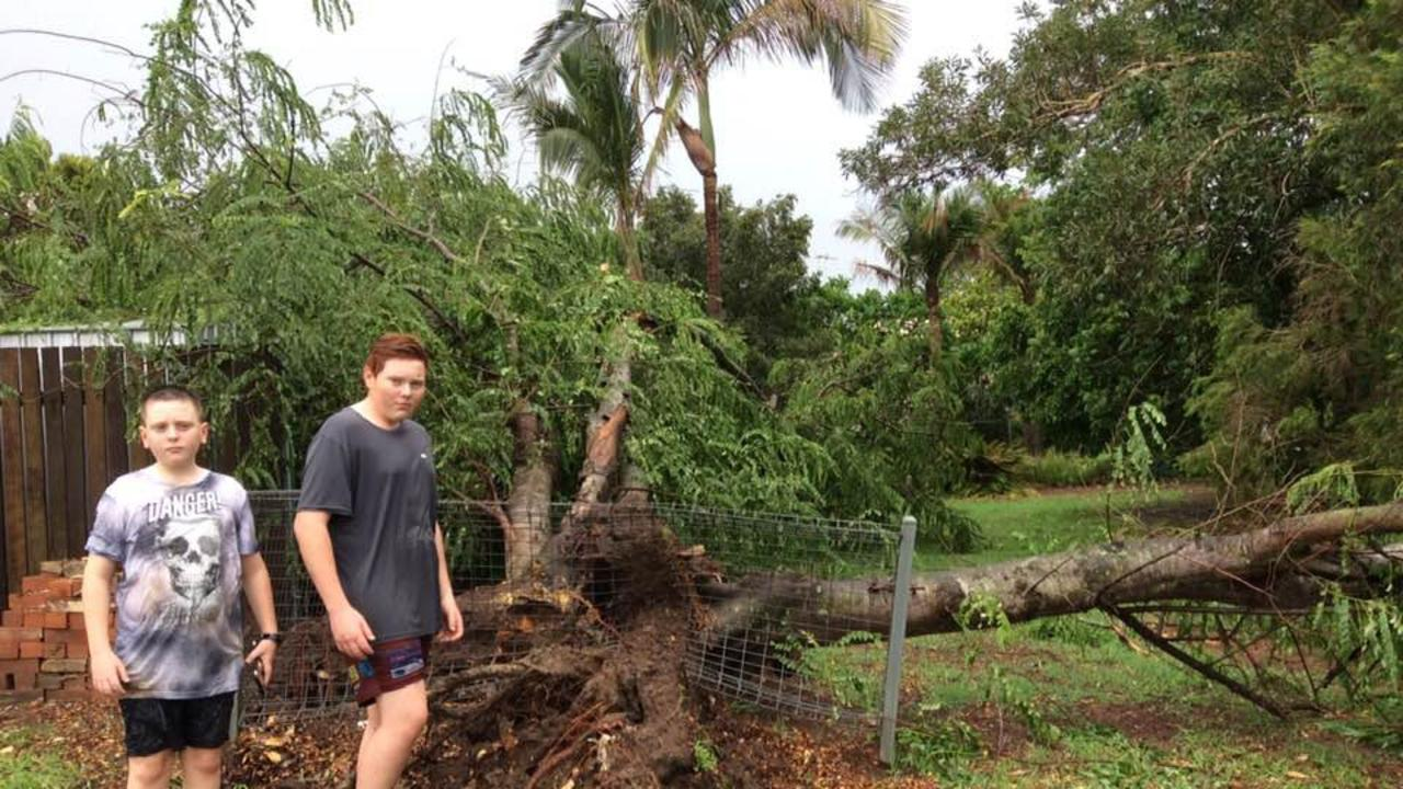 Toni Ensby's neighbours inspect one of the small trees down in her rainforest area Grafton property from a wild storm that hit.
