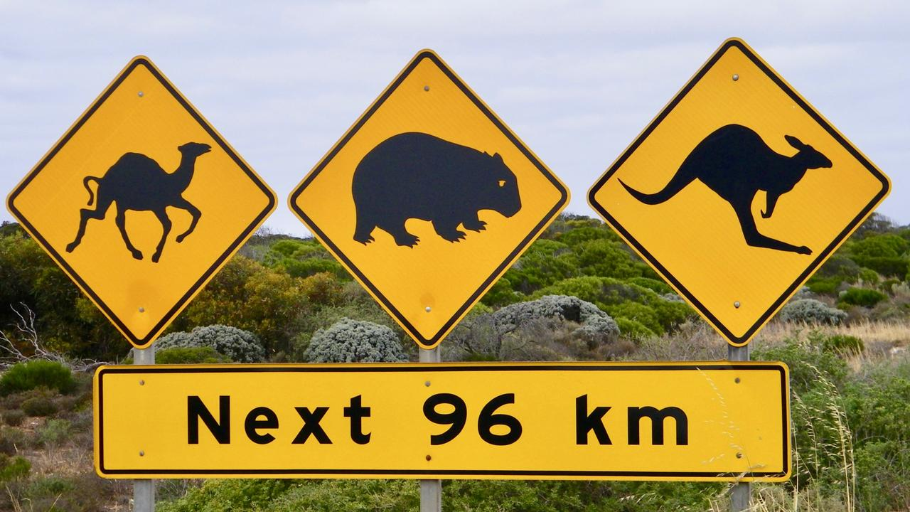 Signs at the beginning of the Nullarbor Plain warn motorists of wildlife they could encounter while travelling the road. Picture: Susan Riley