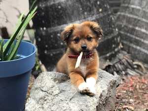 Sunshine Coast's cutest dogs
