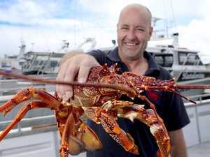 Lobster exports plummet – because of coronavirus