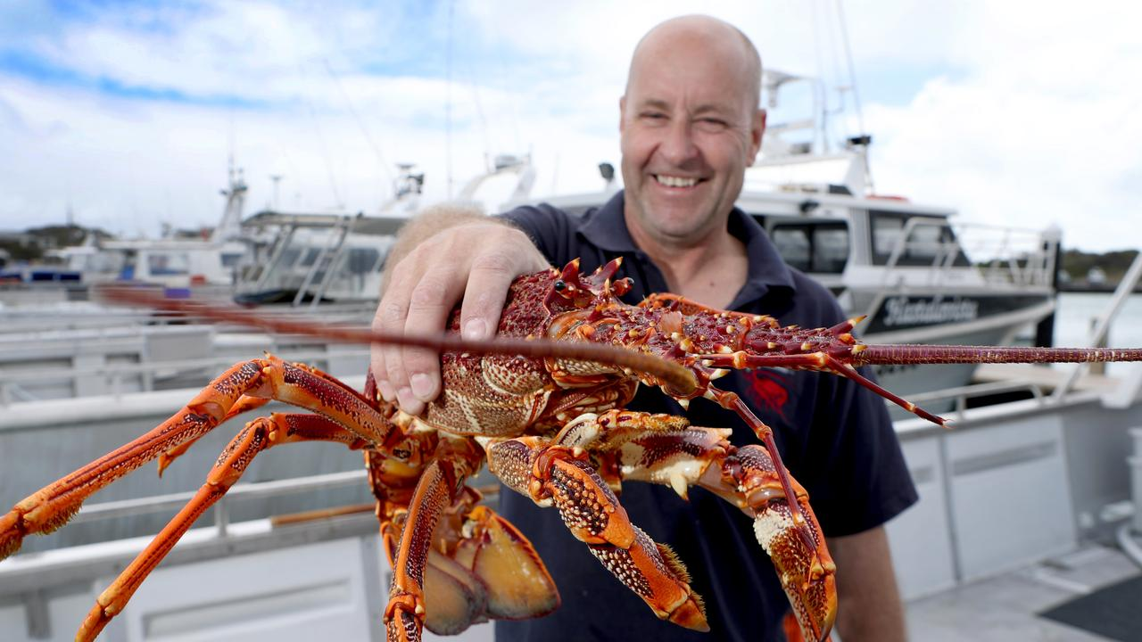 Australia's rock lobster industry is facing a crisis after the coronavirus outbreak in China wiped out 95 per cent of our export market practically overnight.