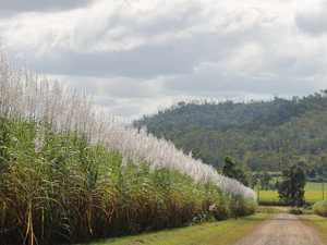 Canegrowers snub appeal for sugar tax