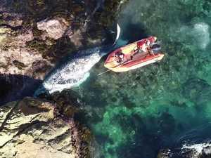 FSC Tathra dead whale op