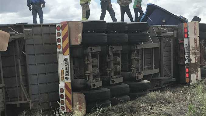 Cattle on road after truck rollover