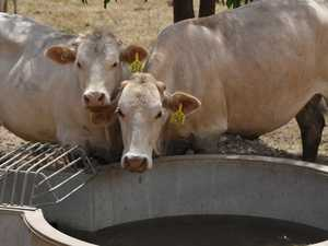 Farmers urged to watch out for salt poisoning of cattle