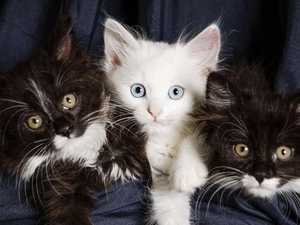 Mum and son horrified as tiny kittens tossed from moving car
