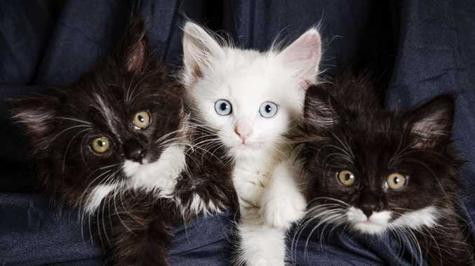 Mum, son horrified to see kittens thrown from moving car