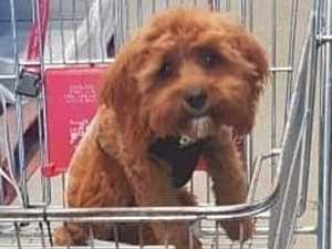 Woman 'belittled' for having pup in trolley
