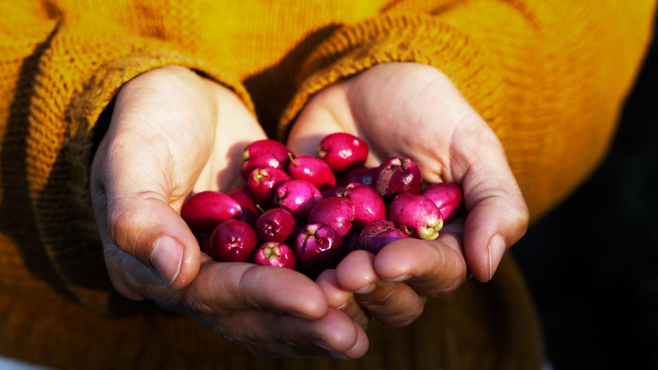 The berries of the native Australian lilly pilly plant can be eaten fresh, and have a lovely flavour in sauces and jams.