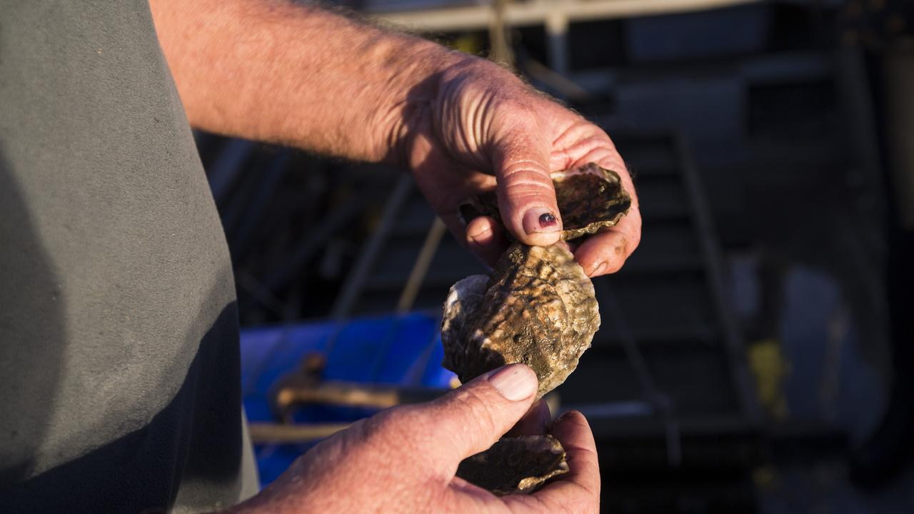 An oyster reef restoration project aims to benefit the health of the estuary and the marine life within the Port Stephens Great Lakes marine park.