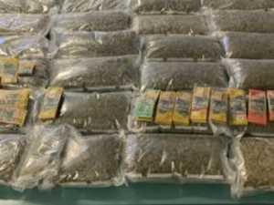 DRUGS BUST: 1000 plants, $70K found in recent raids