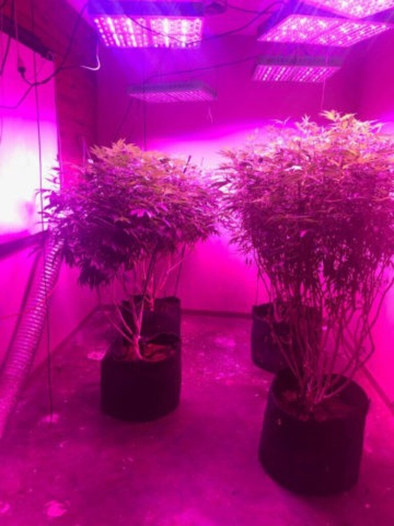 POLICE RAID: Detectives have charged two men after a large number of cannabis plants were located at two Central Queensland properties yesterday.