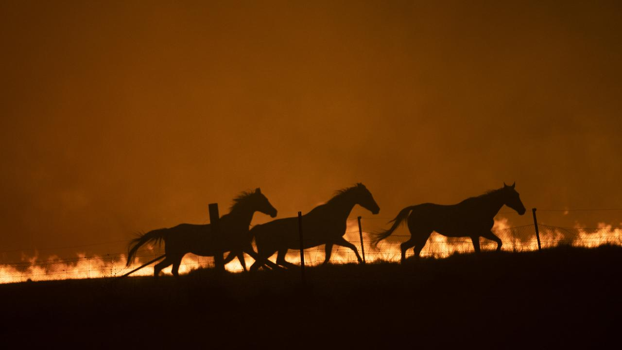 Horses panic as a spot fire runs through a property near Canberra. Picture: Brook Mitchell/Getty Images