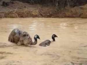Viral video shows Aussie rain miracle