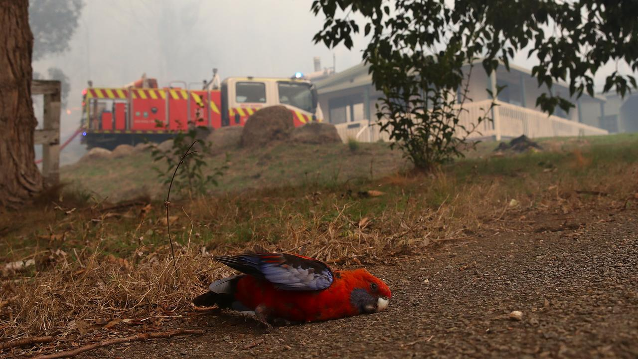 The mates saved a rosella that was overcome by the heat and smoke. Picture: Toby Zerna