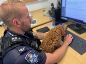 Police pooch Bailey's special school safety message