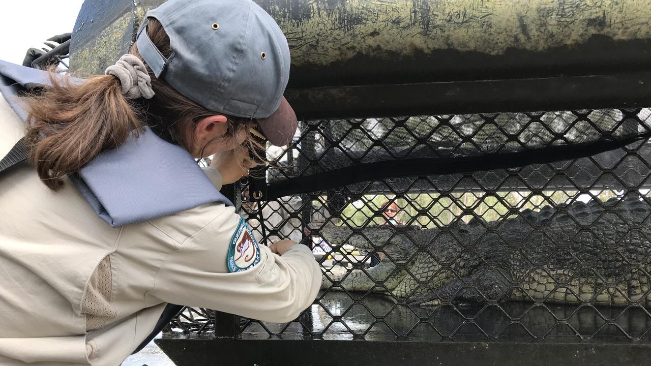 DES staff securing the crocodile