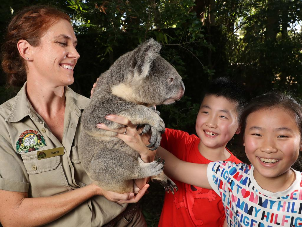 Kayla Ousley Head of Education, holding a koala with Jonathan Yang, 10, and Ellyn Li, 10 of Shanghai, China, Lone Pine Koala Sanctuary, Fig Tree Pocket. Photographer: Liam Kidston