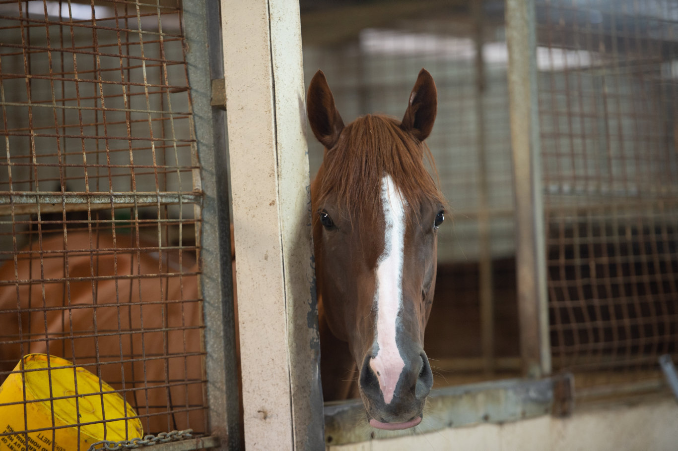 Hellenism stabled at Coffs Harbour.