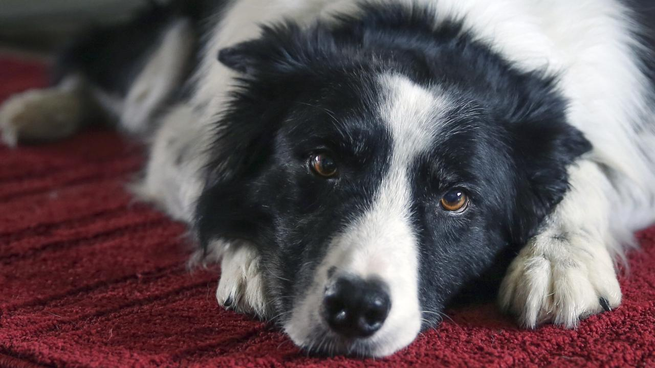 Batches of the Black Hawk dog food have been recalled.