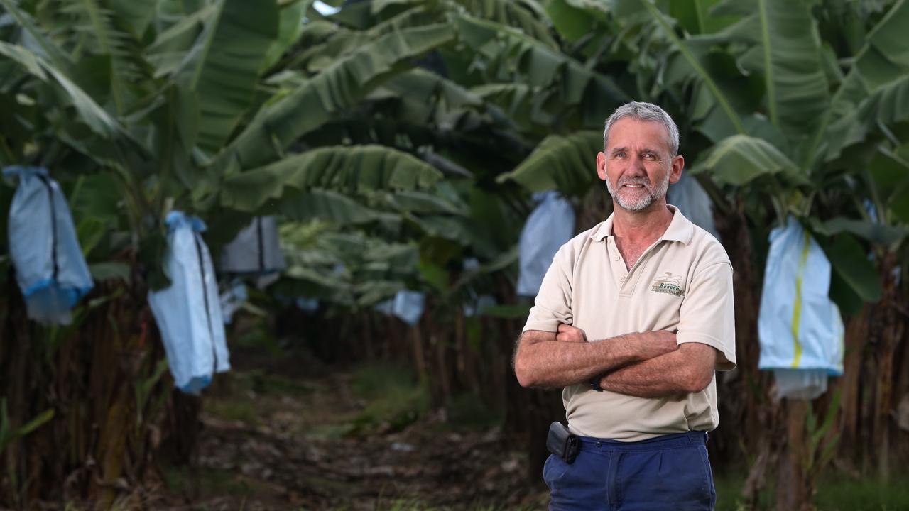 Australian Banana Growers' Council chairman Stephen Lowe. PICTURE: STEWART McLEAN