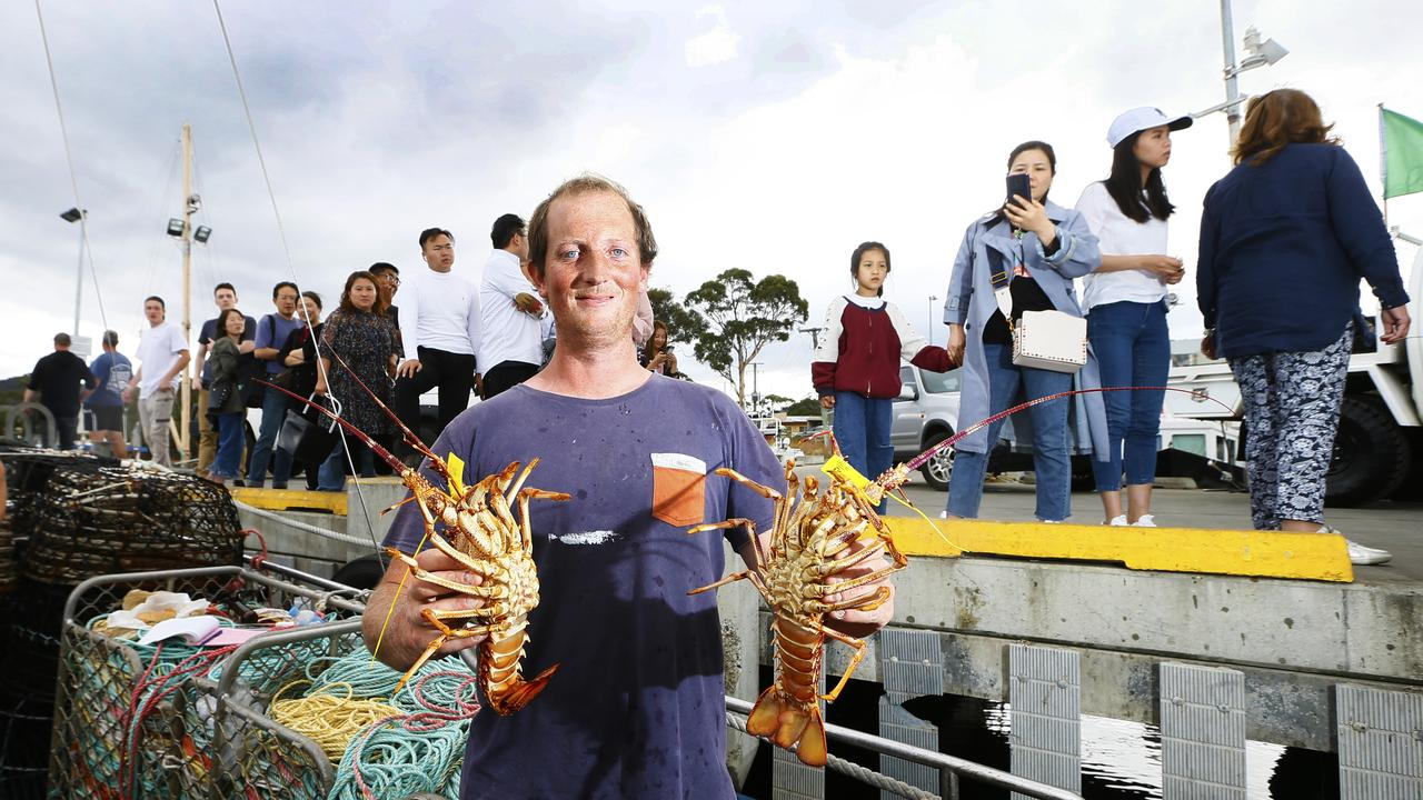 The Cray boat F.V Chieftain is docked at the Margate Wharf selling Crayfish that cannot be exported at this time due to an outbreak of Coronavirus. It is also the Chinese New Year / Lunar New Year so many of our Asian residents and visitors were there to pick up a bargain for their celebrations. Deck supervisor, Arie Jack Patrick is pictured with a couple of rock lobsters. Picture: MATT THOMPSON