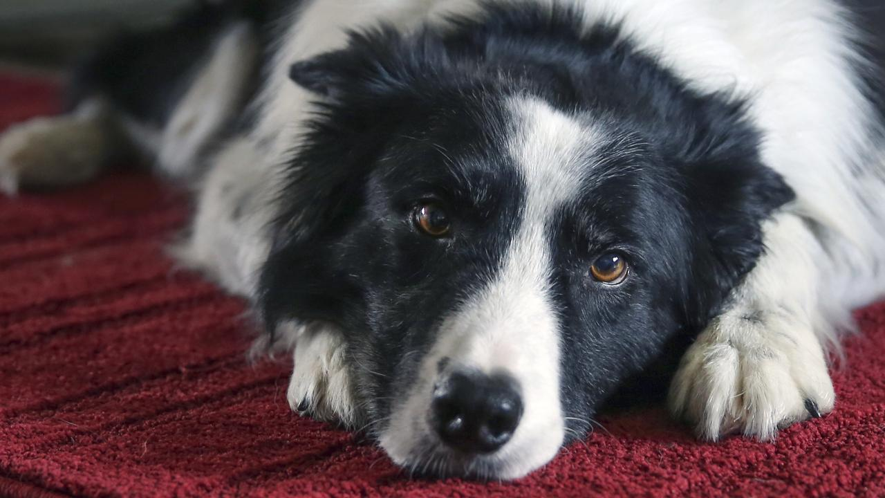 A dog owner whose pooch ate mouldy food and later died missed out on important recall warning due to a bizarre reason most owners wouldn't know about.