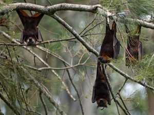 Bats vs people