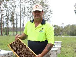 Bushfires bring bees to their knees